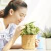 風水に良いと言われている観葉植物ってどれ?!風水における観葉植物の効果や選び方について